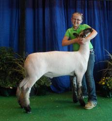 Hauger Club Lambs :: Winners